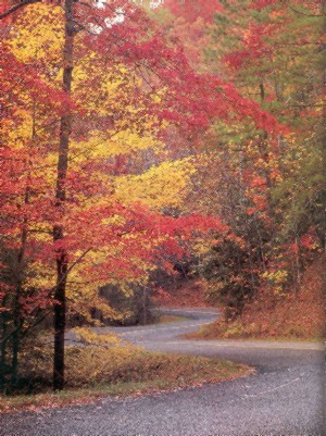 Fall along the Roaring Fork Road in the Tennessee Appalachians